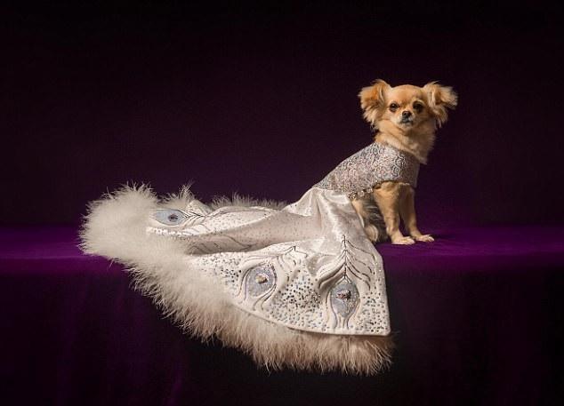 Chiếc áo lông cừu cho cún cưng giá gần 1,2 tỷ đồng. (Nguồn: DM)