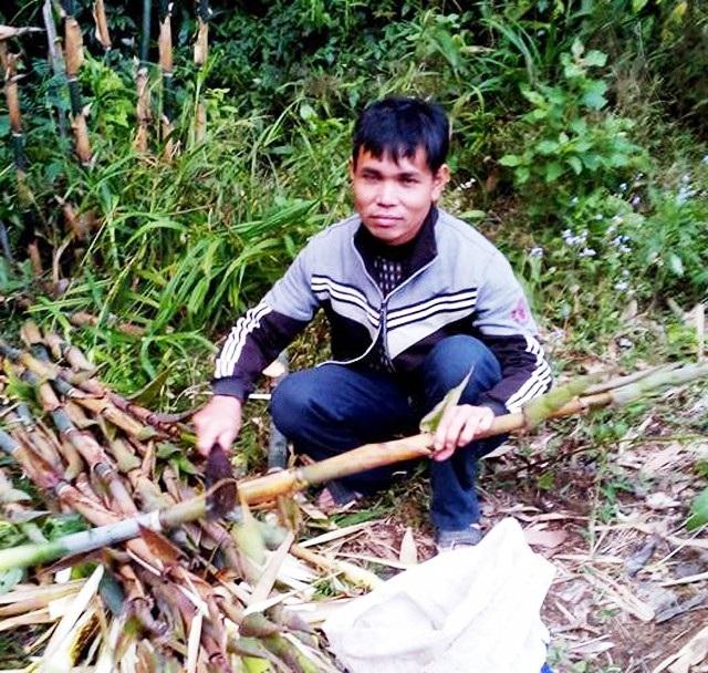 Măng rừng là nguồn thực phẩm chủ yếu của các thầy giáo, nhất là vào mùa mưa, không thể về nhà để lấy thực phẩm dự trữ