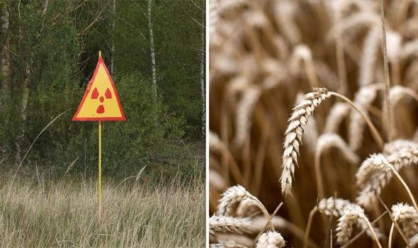 Xem xét khả năng mở lại khu vực bị ảnh hưởng bởi thảm họa Chernobyl để … trồng trọt - 1