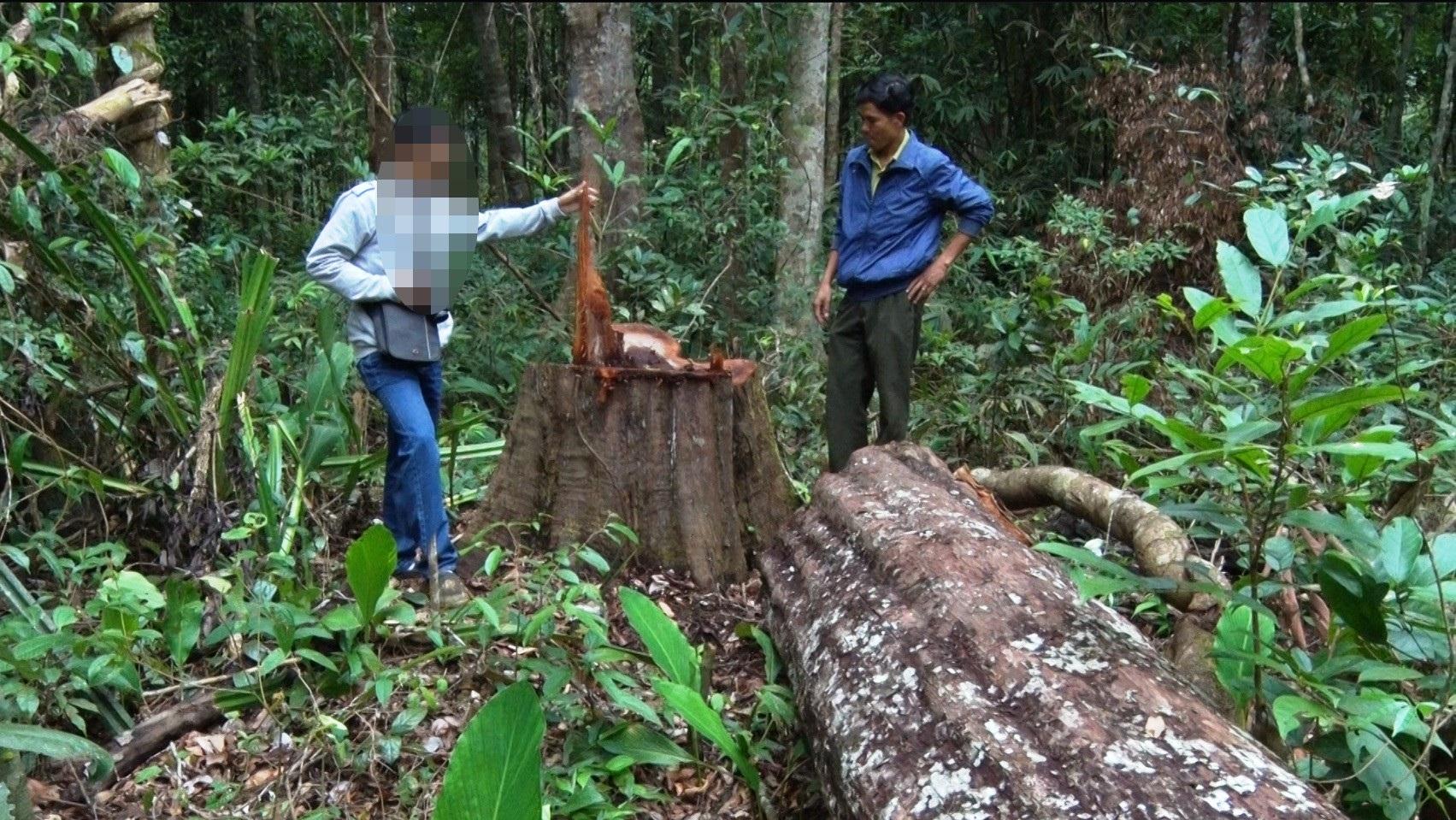 Hiện trường rừng bị tàn phá tại huyện Đắk Song