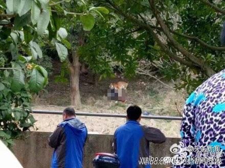 Các nhân viên vườn thú phải mất hơn 1 giờ mới đưa được nạn nhân ra ngoài (Ảnh: Weibo)