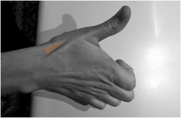 Bạn biết gì về hõm lào giải phẫu trên bàn tay? - 1