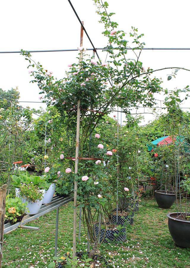 Năm 2014, ông Hùng đầu tư thuê 4 hecta đất tại Tam Hiệp - Thanh Trì – Hà Nội để trồng và sưu tập các loại cây cảnh quý hiếm trong đó dành một phần để trưng bày và nhân giống các loại hoa hồng quý hiếm.