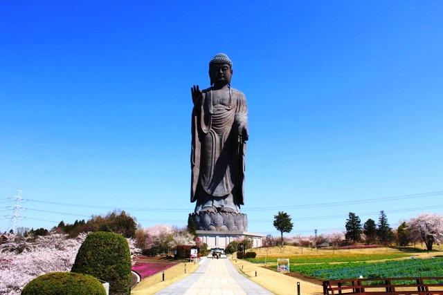 Tượng Đức Phật bằng đồng cao 120m ở Ibaraki. Ảnh: VTV