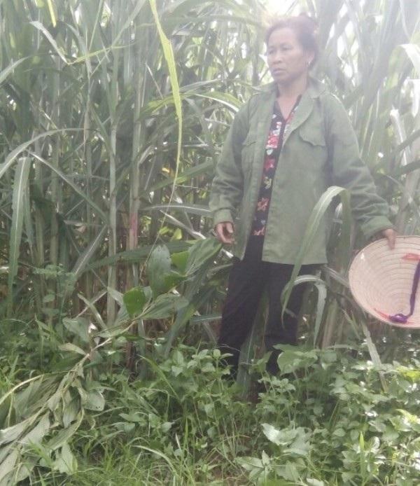 Bà Lý bàng hoàng khi phát hiện vườn keo của gia đình bị phá hoại