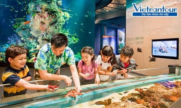 Tại khu Touch Pool, các bé còn được chạm tay trực tiếp vào các chú sao biển xinh xắn