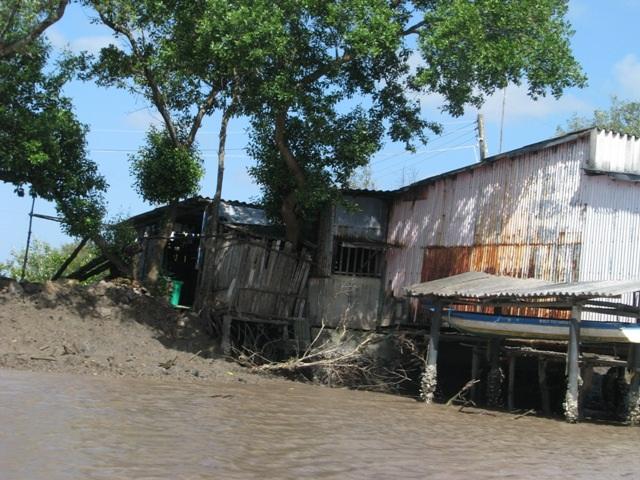 Người dân Cà Mau thường quen làm nhà ở ven sông, nên nguy cơ bị ảnh hưởng khi sạt lở xảy ra là rất cao.