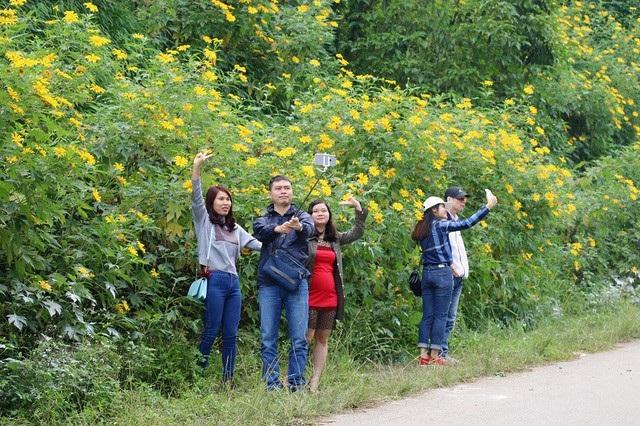 Được biết đến là một trong vườn hoa dã quỳ lớn nhất ở Hà Nội, vườn Quốc Gia Ba Vì trở thành điểm ngắm hoa, du lịch thu hút khá nhiều du khách. Ảnh: Tiểu Phương