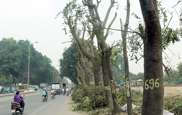 Những cây xanh cần đánh chuyển được đánh số theo bên chẵn lẻ của tuyến đường Phạm Văn Đồng