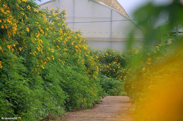 Hoa mọc bạt ngàn khắp các con đường. Ảnh: Xuân Lộc