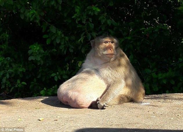Bác béo ngồi sưởi nắng