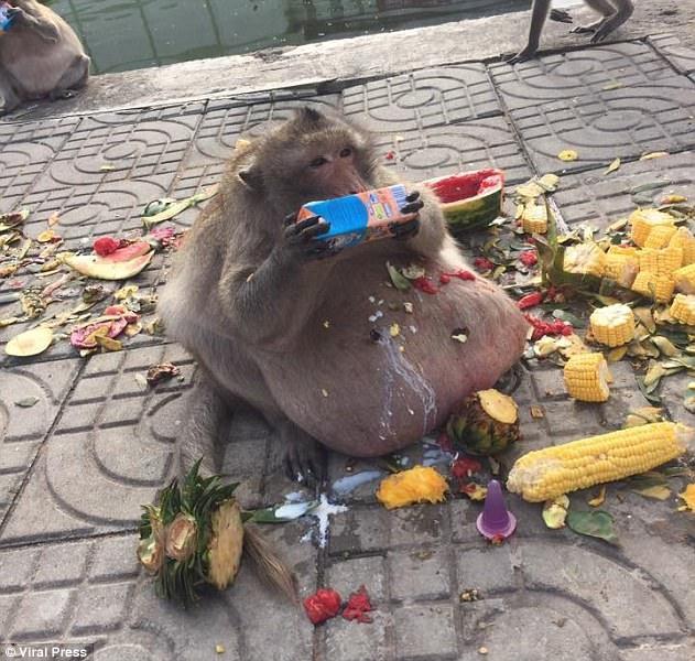 Bác béo bên đống đồ ăn la liệt do du khách mang tới