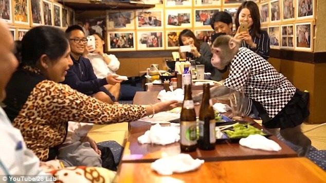 Cô khỉ Fuku-chan phục vụ khăn giấy cho khách hàng (Ảnh: 28lab/youtube)