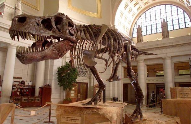 Hai chi trước nhỏ xíu của T-rex có lẽ không vô dụng như chúng ta vẫn nghĩ - 3