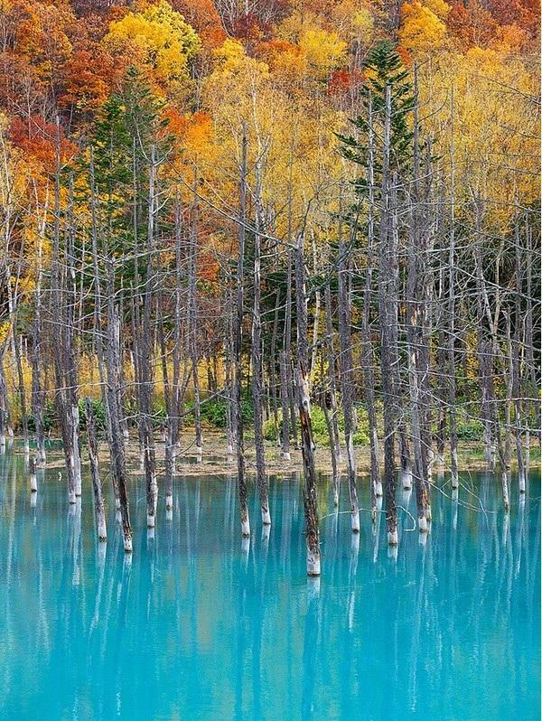 Mùa thu đến, những chiếc lá vàng soi bóng dưới mặt nước xanh càng khiến khung cảnh thêm thi vị.