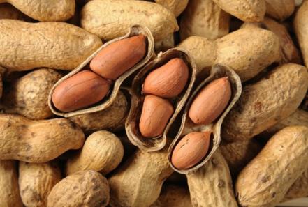 Các nhà nghiên cứu đã xác định được 6 gen gây ra phản ứng dị ứng với đậu phộng.