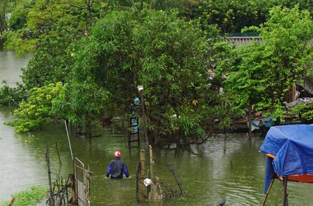Nhiều chuồng trại chăn nuôi của người dân xã Hưng Lợi (Hưng Nguyên, Nghệ An) bị ngập sâu