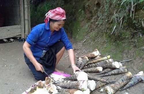 Măng bói là loại măng ngọt giá bán 30 ngàn đồng/kg cả vỏ, còn măng đã bóc vỏ giá bán 80 ngàn đồng/kg, đắt hơn cả thịt cá.