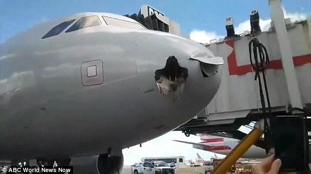 Chú chim mắc kẹt vào đầu máy bay sau va chạm (Ảnh: ABC World News)