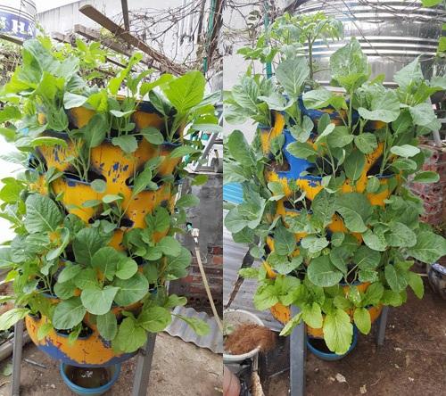 Ngoài ra, chị Hà còn tiến hành trồng củ quả treo ngược. Đó là cách chị học tập từ người nước ngoài. Theo chị, cây được trồng ngược đỡ sâu bệnh, hút được chất dinh dưỡng tối đa, tiết kiệm nước và cho năng suất cao.