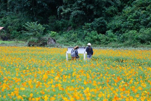 Những cánh đồng hoa bạt ngàn trải dài ngút tầm mắt tạo cho nơi đây vẻ đẹp như bức tranh.
