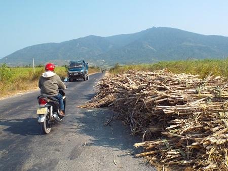 Sự cố nước thải Nhà máy Đường Khánh Hòa khiến người trồng mía ở thị xã Ninh Hòa (Khánh Hòa) khốn đốn, mía phơi trên ruộng