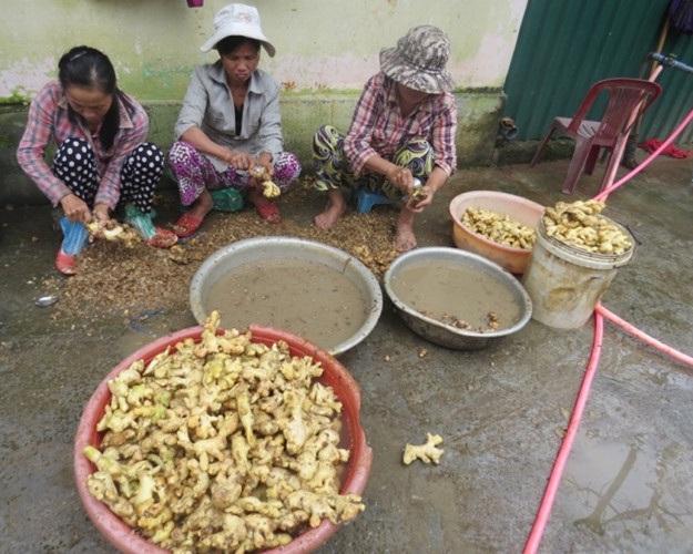 Đầu tháng chạp (tháng 12 âm lịch), làng nghề mứt gừng ở phường Kim Long (TP Huế, Thừa Thiên Huế) lại tất bật, người cạo vỏ, kẻ bào gừng. Gừng làm mứt được trồng ở cầu Tuần, xã Thủy Bằng, hương vị cay hơn gừng trồng nơi khác.