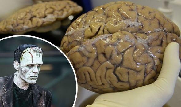 """Lần đầu tiên nuôi cấy thành công """"bộ não tí hon"""" trong phòng thí nghiệm - 1"""