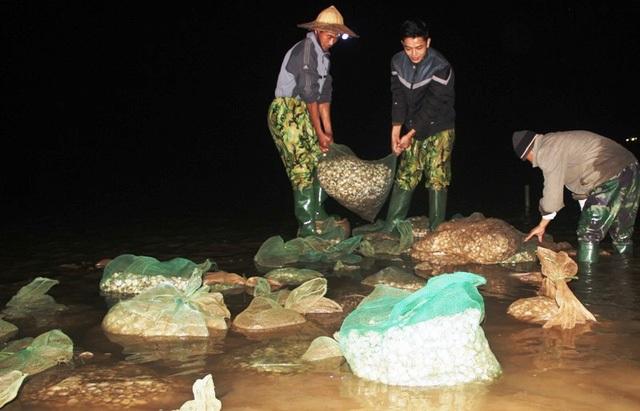 Ngao chết hàng loạt tại nhiều địa phương ven biển Thanh Hóa