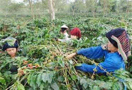 8 tháng đầu năm 2017: Hơn 700.000 lao động nông thôn được học nghề - 3