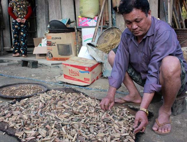 Ông Nguyễn Văn Tiến (57 tuổi, trú bản Cam, xã Cam Lâm, Con Cuông, Nghệ An) nổi tiếng bởi có đến 9 người vợ.