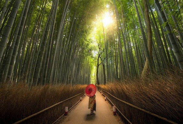 Bức ảnh trong rừng tre tại Nhật Bản