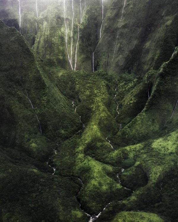 Một khu rừng ở hòn đảo Kauai trên Thái Bình Dương