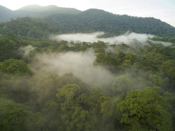 Các cánh rừng nhiệt đới như ở In-đô-nê-xia đang chết dần.