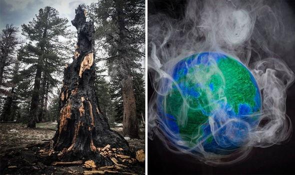 Các khu rừng nhiệt đới đang góp phần vào sự nóng lên toàn cầu - 1