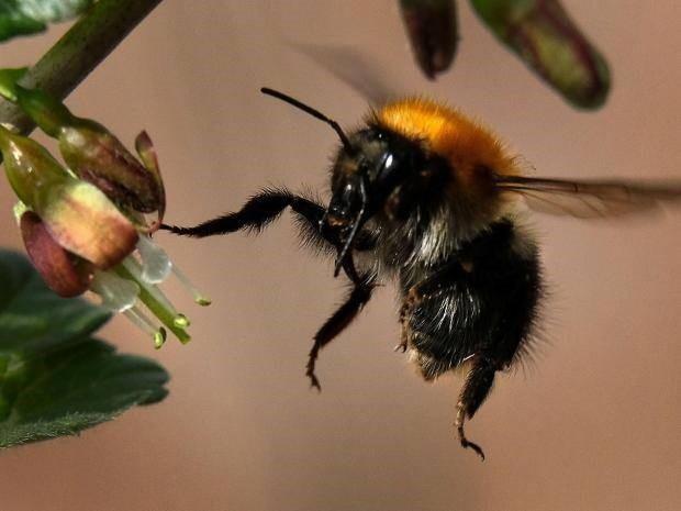 Thuốc trừ sâu diệt sâu bọ nhưng lại thân thiện với côn trùng có lợi - 1