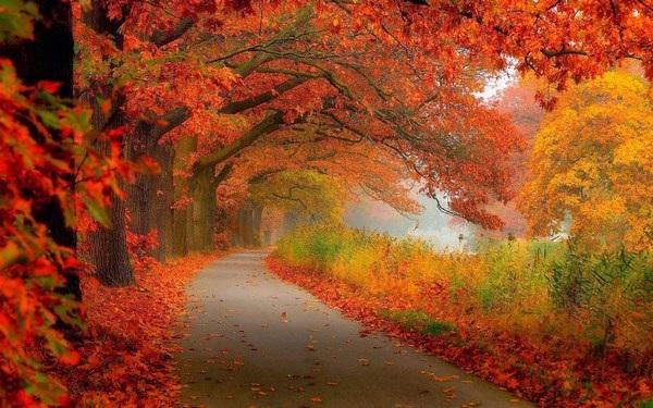 """Đẹp nhẹ nhàng và lãng mạn với bộ sưu tập hình nền """"những con đường"""" - 4 Đẹp nhẹ nhàng và lãng mạn với bộ sưu tập hình nền """"những con đường"""""""