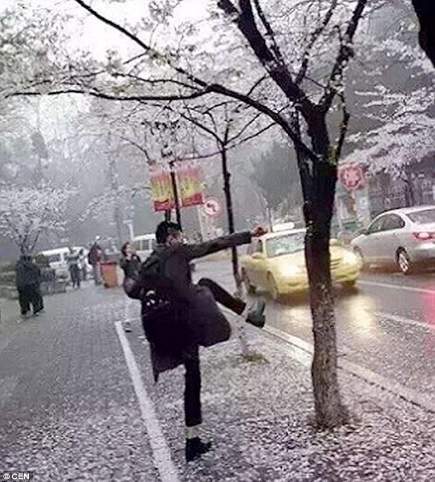 Khách Trung Quốc đạp cây để hoa rụng xuống gốc chụp hình cho đẹp