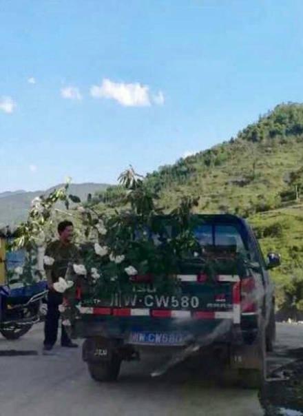 Nhổ cả cây hoa để mang về