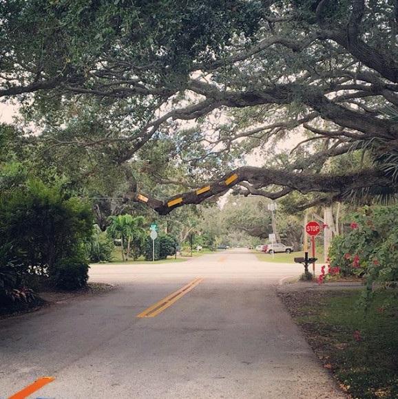 Thay vì cắt bỏ đi cành cây đang sà sát mặt đường, những nhân viên đô thị này đã nghĩ ra cách đơn giản hơn là gắn vào đó những tấm phản quang để cảnh báo mọi người.