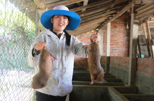 Cử nhân 8X Nguyễn Thị Phượng cùng với trang trại nuôi dúi, nhím của mình. Ảnh: T.H
