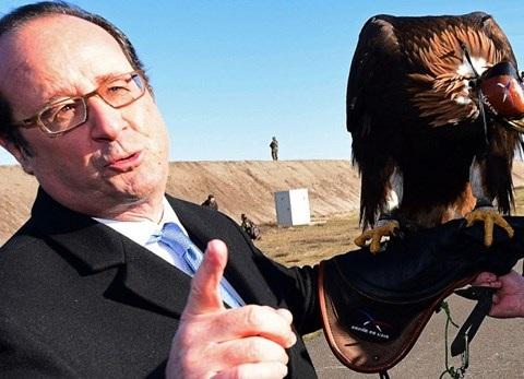 Con chm ưng D'Artagnan đậu trên tay ông Hollande
