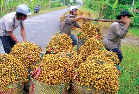 Việt Nam mất cơ hội làm giàu nhờ Trung Quốc
