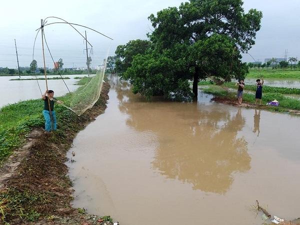 Người dân tại Hà Đông (Hà Nội) rủ nhau đánh bắt cá sau mưa bão.