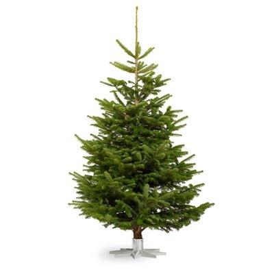 Những cây thông thật có giá tiền triệu mùa Giáng sinh 2017. Ảnh: Facebook