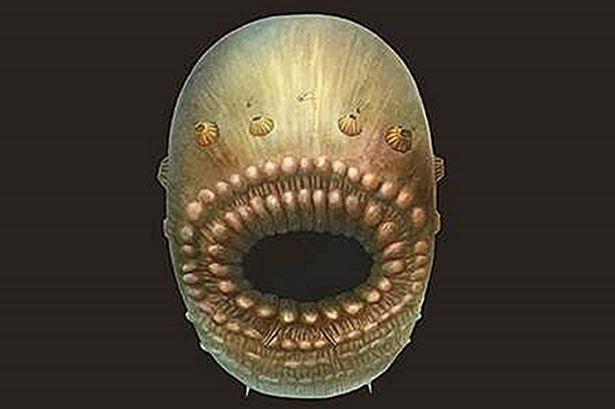 Loài người đã tiến hóa từ một sinh vật biển gớm ghiếc có cái miệng lớn? - 1