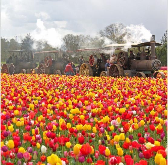 Mỹ: 7 cánh đồng hoa tulip không nên bỏ qua trong mùa xuân này - 1