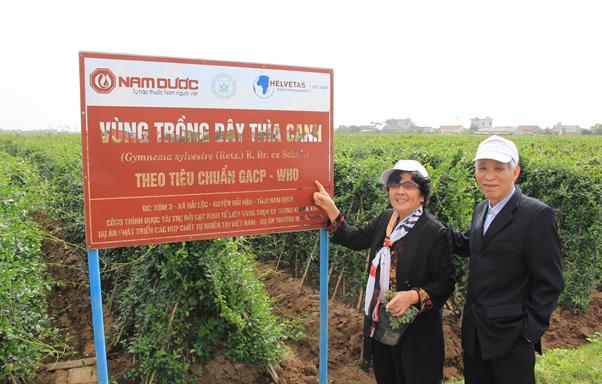 Vùng trồng Dây thìa canh rộng 3ha đạt tiêu chuẩn GACP-WHO của Tổ chức Y tế Thế Giới tại Hải Hậu – Nam Định