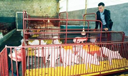 Anh Phạm Văn Hoàn tỷ phú nhờ kinh doanh tổ hợp trang trại.