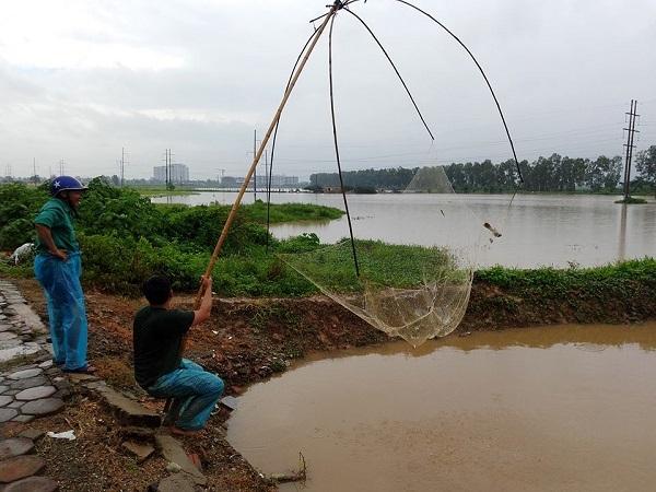 Mỗi lần mưa lớn, khu vực này thường xuất hiện rất nhiều cá và các loại cá ở đây chủ yếu là cá rô phi.